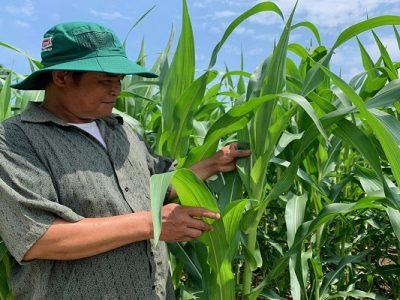 Chia sẻ của nông dân về hiệu quả bất ngờ của N46.PLUS