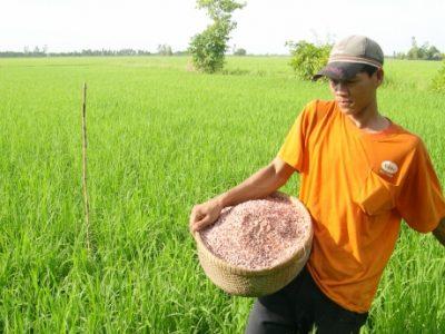 Thay đổi tư duy, nhận thức nông dân để sản xuất bền vững ĐBSCL