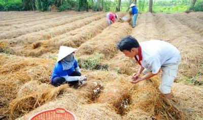 Để biến 156 triệu tấn phụ phẩm nông nghiệp thành tiền